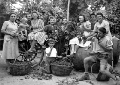 'Vendemmia', Versiola, anni '40