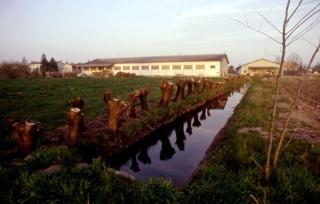 'Inverno 1993. La stessa roggia Battiferro dopo l'intervento della Associazione UPPB'