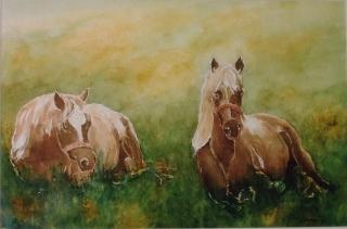 'Cavalli', acquerello