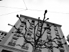 'Albero e appartamenti' (Ginevra)