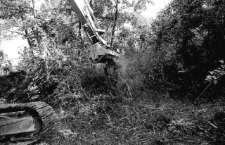 'Riqualificazione ambientale', Gruaro, luglio 2003