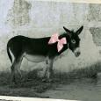 """L'associazione culturale """"La Ruota"""" di Gruaro conclude l'anno 2014 ospitando, venerdì 12 dicembre 2014 alle ore 20:45 presso la Villa Ronzani di Giai di Gruaro, la scrittrice Chiara Carminati per la presentazione del libro """"Fuori fuoco"""", edito da Bombiani. """"Fuori fuoco"""" racconta la prima guerra mondiale attraverso gli occhi di una ragazzina, Jolanda, chiamata """"Pajute"""", per i suoi capelli biondi. Siamo in Friuli, a Martignacco, e la protagonista ci accompagna con i suoi pensieri e le sue azioni in una specie di diario che combina parole e fotografie """"fuori fuoco"""". Il libro è una storia di donne che combattono una […]"""